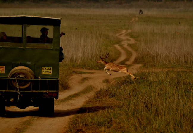 Jim-Corbett-National-Park-Verendera-Shekhawa