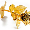 Gold-dipped-rose-Sharps-Pixley