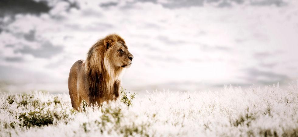 Pride Of Africa - by Klaus Tiedge