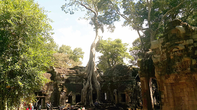 Ta Phrom Temple Made Famous by Tomb Raider and Sometime Cambodia Resident, Angelina Jolie