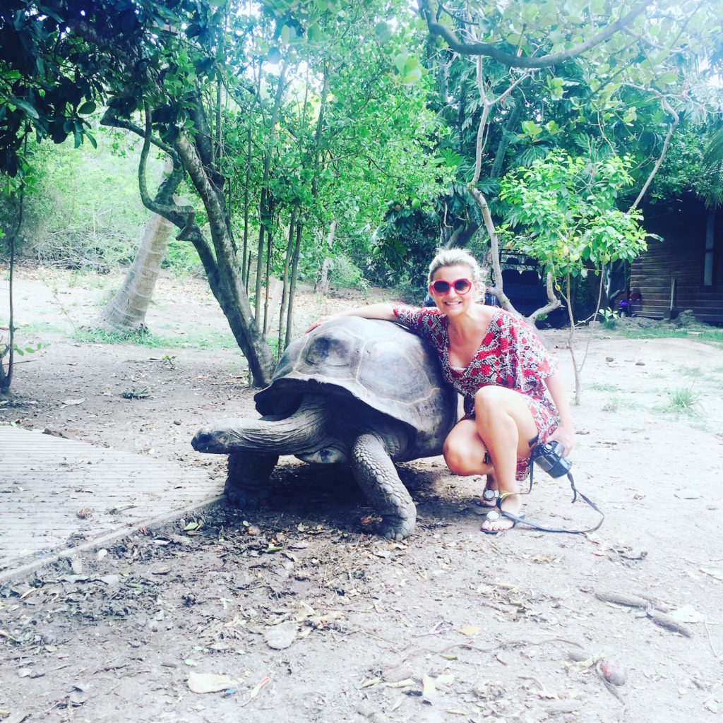 Necker Island Aldabra Tortoise