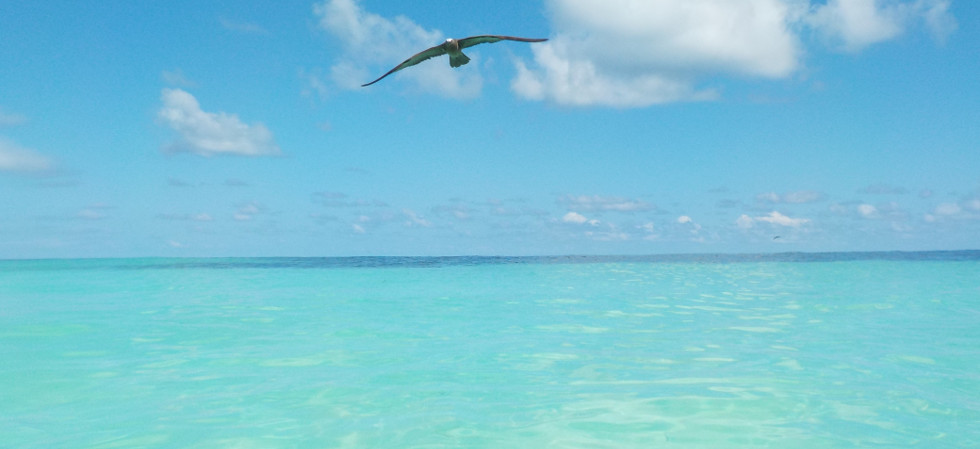 The Bird Island Travel Review