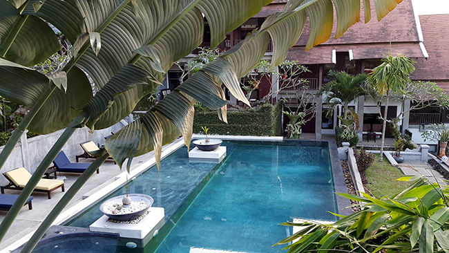 Fan Palms Trees around the Pool
