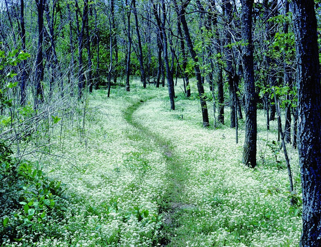 North Carolina's beautiful Appalachian Trail. Image credit: pixabay.com.
