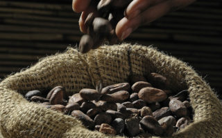 raw cacao