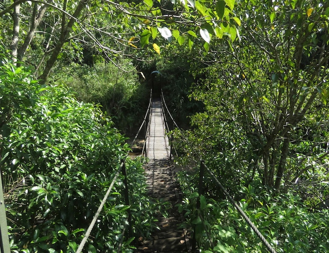 Amba bridge
