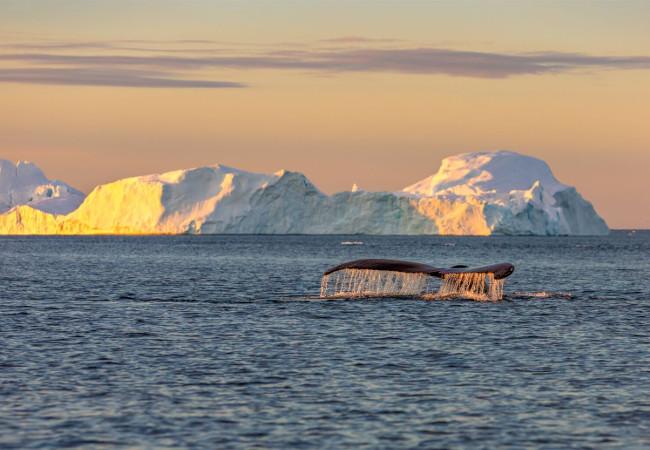The Maiden Expedition Through the Northwest Passage