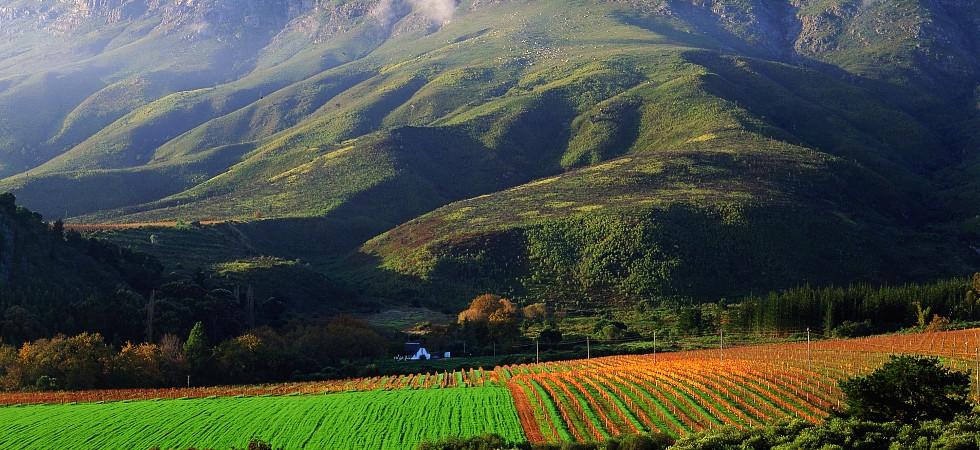 CAPE VINEYARDS-CAPE WINELANDS-SOUTH AFRICA