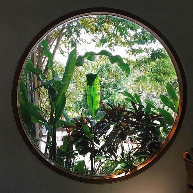 The stunning jungle view from Sage's window