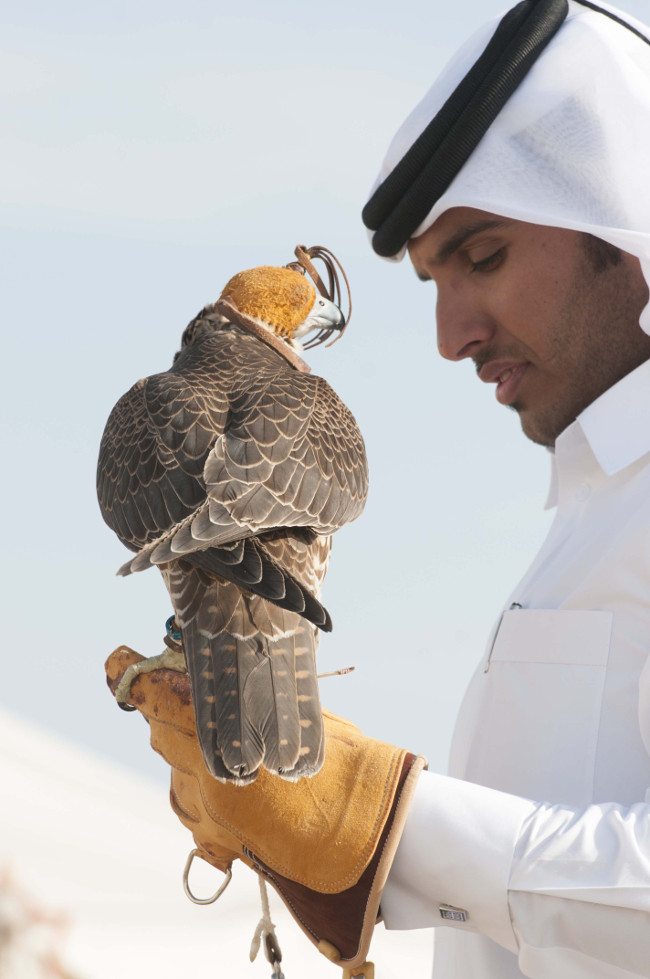 Falconry-a-popular-Qatari-sport
