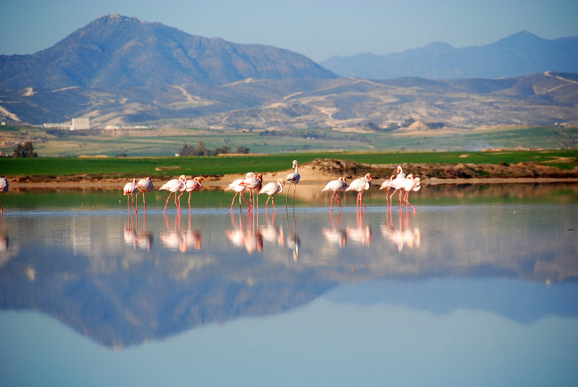 Flamingos at the Salt Lake Nt. Halla