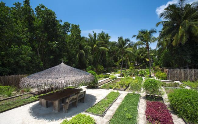 Tropic Breeze - Gili Lankanfushi Organic Garden