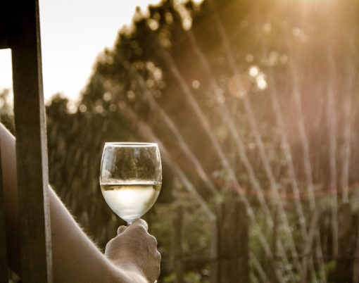 drinking wine summer