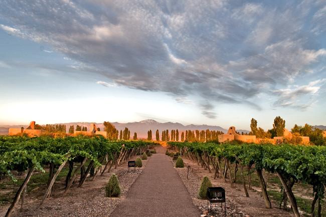 Vineyards-by-Cavas-maita-barrenechea