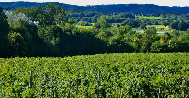vineyard-downs-green