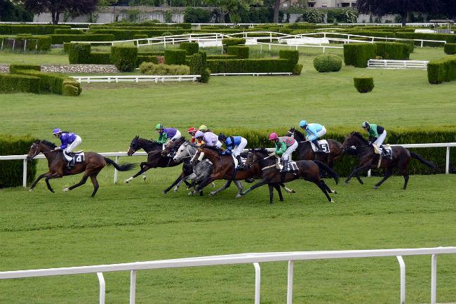 Understanding Horse Racing
