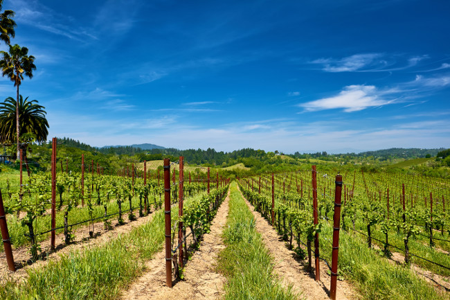 Vineyards landscape in California, USA