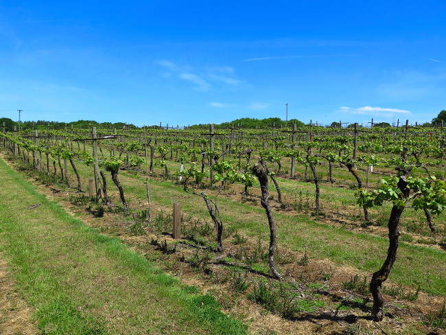 3 countries you never knew made great wine