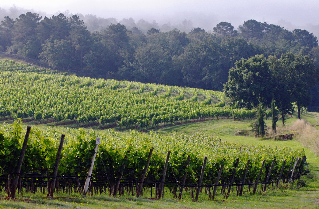 Arcanum wines: The 'Terroiriste' of Tuscany