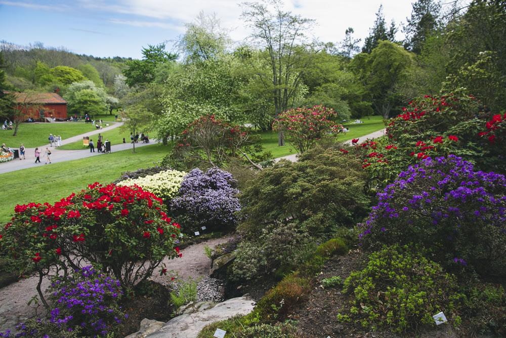 Botaniska trädgården_Peter Kvarnström_1805-32