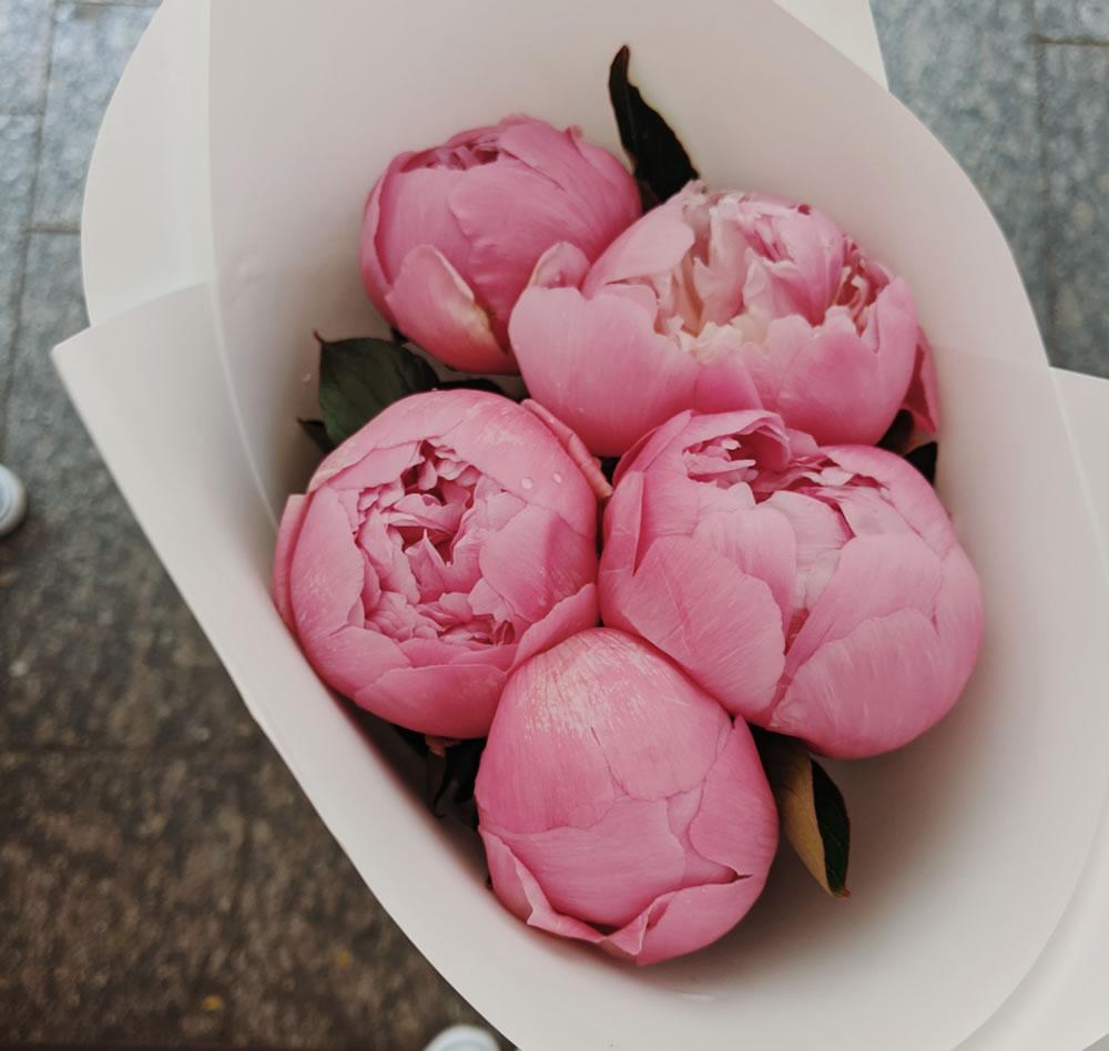 pink-peonies-3413798