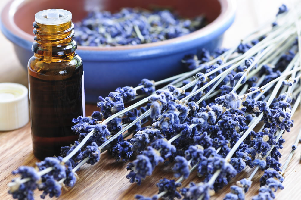 bigstock-Lavender-Herb-And-Essential-Oi-3408134