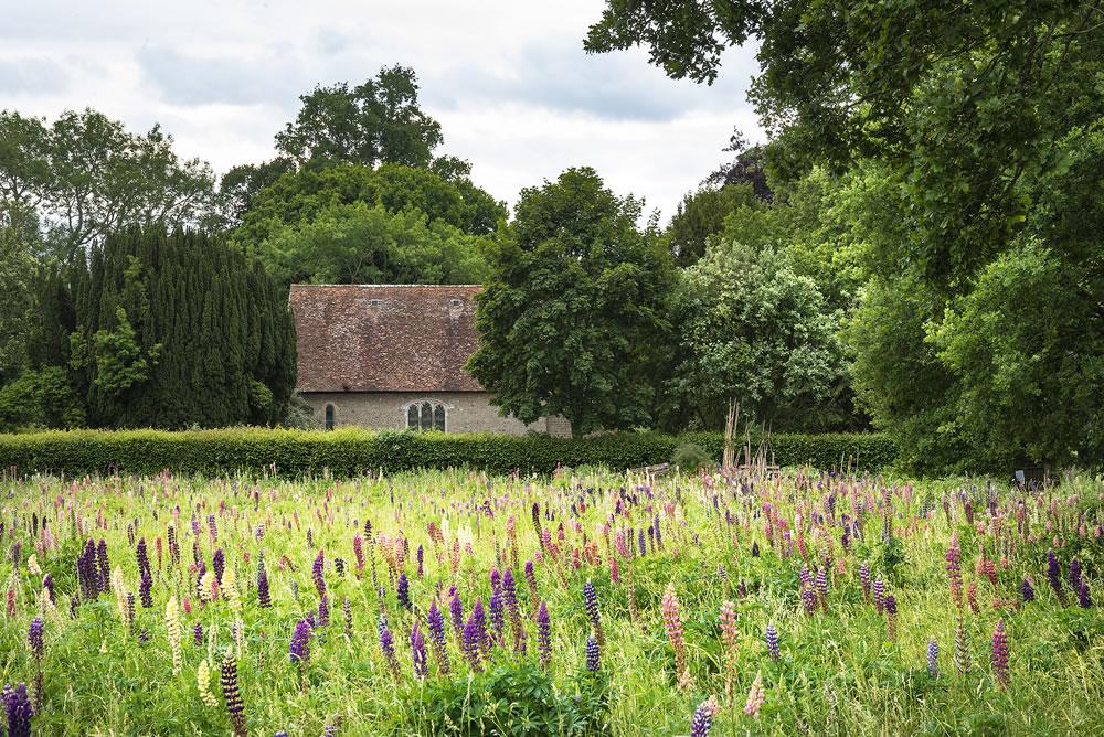 bigstock-Beautiful-Summer-Meadow-Of-Vib-377746531