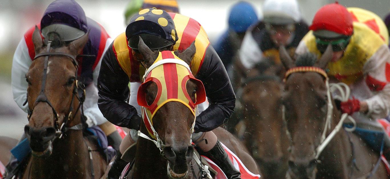bigstock-Horse-Racing-Winning-1649215