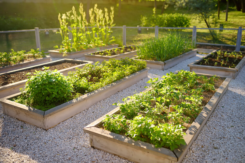 Raised garden beds for herbs and plants.