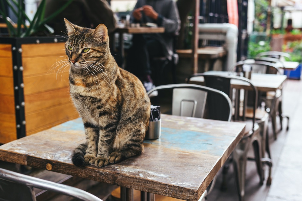 Cat sitting on a table in a café
