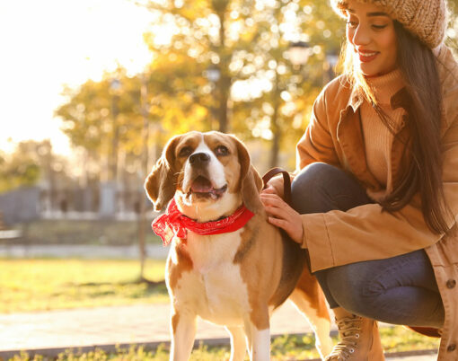 bigstock-Woman-Walking-Her-Cute-Beagle--399845192