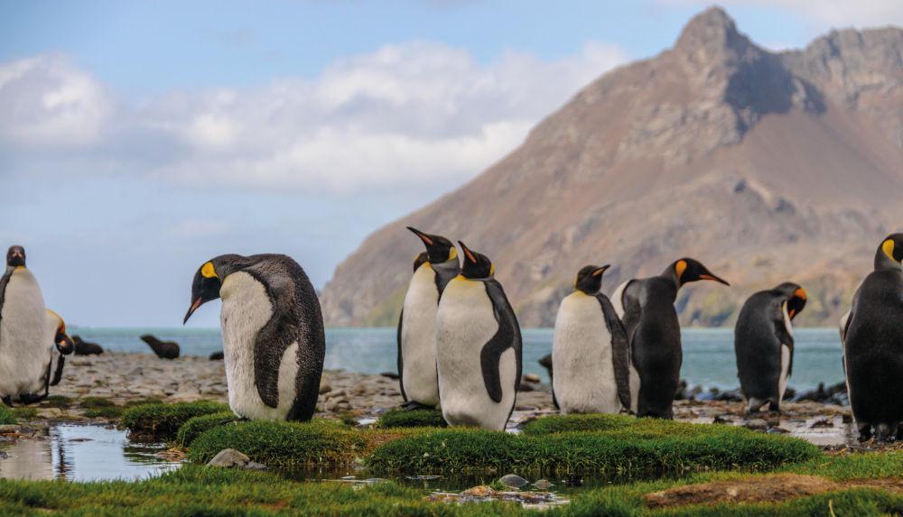 South Georgia Island, Sub-Antarctic Island