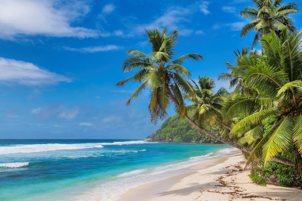 Sandy beach with palm and turquoise sea in Barbados