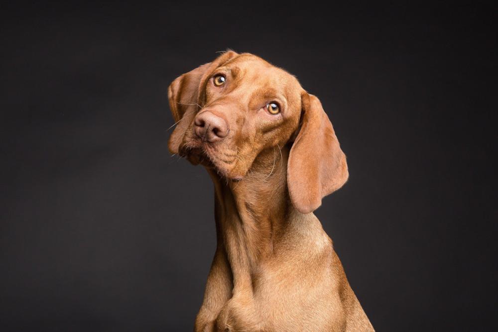 Dog facing camera