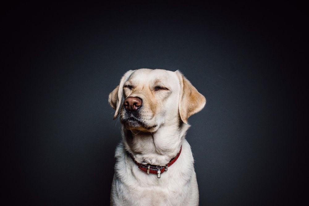 Dog infant of camera