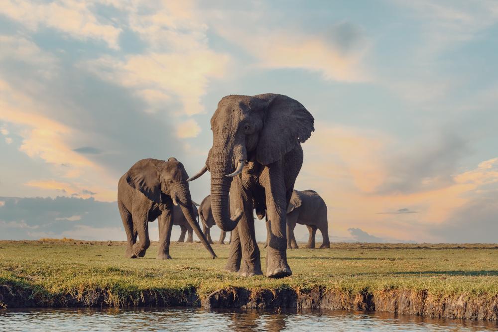 Majestic African Elephants
