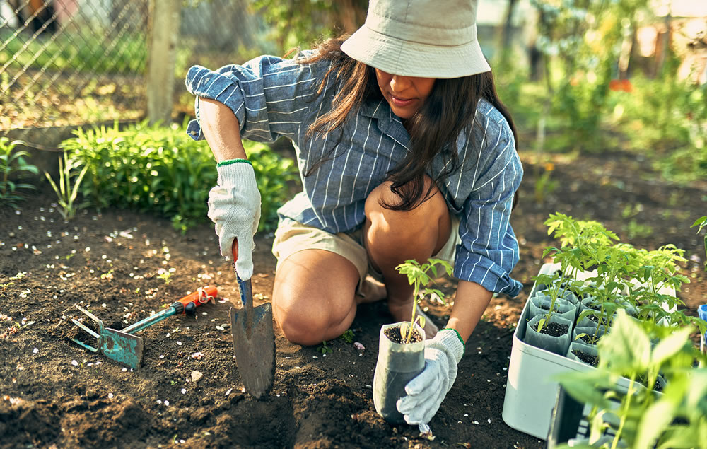 planting some vegetables in garden