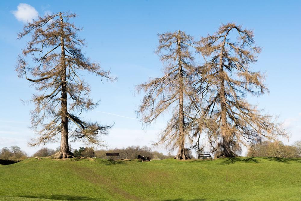 Landscape of a public park in St Albans, England